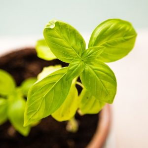 Baby green plant